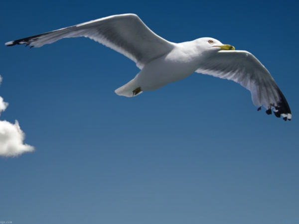 Living like Jonathan Livingston Seagull
